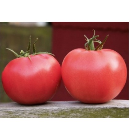 Tomate APHEN F1- ROZ